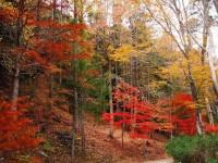 第152回・森で遊ぶ会(愛知・県民の森の紅葉)のご案内【予定日:11月20日】