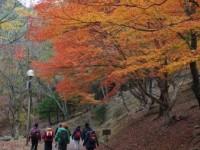 第152回・森で遊ぶ会(愛知・県民の森)実施報告