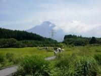 第155回・森で遊ぶ会(小田貫湿原の花たち)実施報告