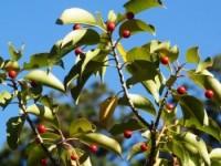 高山・市民の森 森林教室実施報告<竹笛づくり>