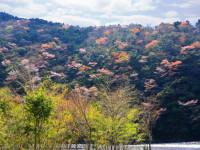 第160回・森で遊ぶ会(安倍川沿いのサクラ)のご案内【このイベントは終了しました】