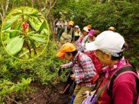 第163回・森で遊ぶ会(富士山・御庭)実施報告