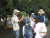 子ども樹木博士(県立美術館の森)実施報告