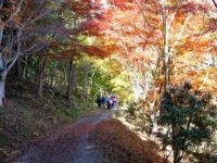 第175回・森で遊ぶ会(愛知・県民の森)実施報告