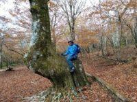 第181回・森で遊ぶ会(富士山・西臼塚)のご案内